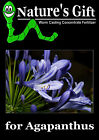 AGAPANTHUS PLANTS FERTILIZER, WORM CASTING EXTRACT CONCENTRATE, ORGANIC