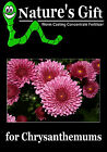 CHRYSANTHEMUM SEEDS, CHRYSANTHEMUM PLANTS, WORM CASTING CONCENTRATE ORGANIC