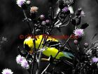 Dramatic Goldfinch on Purple Flower Original Signed Handmade Matted Picture A734