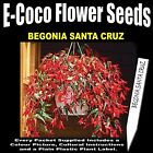 BEGONIA SANTA CRUZ, 15 SEEDS IN EACH PACKET