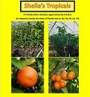 Free Delivery Grafted Citrus Trees Orange Lemon Lime Tangerine Calamansi Meyer