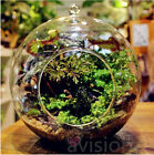 Внешний вид - Flower Hanging Vase Glass Planter Plant Terrarium Container Home Wedding Decor