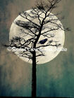 Crow on Tree on a  Full Moon Signed Original Matted Photograph Picture A189
