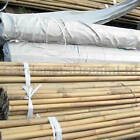 2FT 3FT 4FT 5FT 6FT 7FT 8FT BAMBOO GARDEN CANES STRONG THICK QUALITY SUPPORT