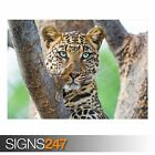 BEAUTIFUL LEOPARD (3807) Animal Photo Picture Poster Print Art A0 A1 A2 A3 A4