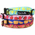 Zangy Cute Designer Dog Collar, Soft Padded & Adjustable