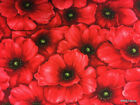 Red Poppy All Over Packed Poppies Floral Flowers Cotton Fabric t2/19