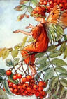 Mountain Ash Tree Fairy ~ Cicely Mary Barker ~ Cross Stitch Pattern