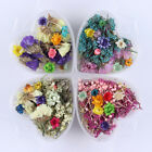 Nail Mixed Dried Flowers 3D Nail Art Decoration Manicure DIY Preserved Flower