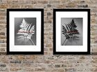 Set of 2 Art Prints Newfangled Black White Fern Art Decor Matted Picture A352