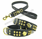 EXCLUSIVE ENGLISH BULL TERRIER DOG COLLARS AND LEAD PADDED LEATHER BRASS STUDDED