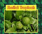 * Persian Lime * USDA Inspected * Healthy ( GIFT IDEA )
