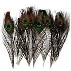 GOOD 10pcs Natural Real Peacock Feather House Decoration