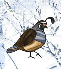 clr:wnd QUAIL BIRD - Stained Glass Vinyl Window Decal Sticker ©YYDC CHOOSE SIZE