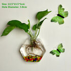 Wall Hanging Glass Vase Hydroponic Terrarium Fish Tank Plant Flower Pot