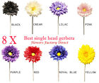 8 Single Head Stem Gerbera, best quality, supreme colours All Colours