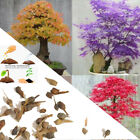 20Pcs/Bag Maple Tree Bonsai Seeds Acer Palmatum Atropurpureum Plant Garden