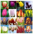 Tulip Flower Seeds Bonsai Hydroponic Seeds Home Garden Ornamental Plant 20pcs