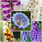 100 pcs Foxglove Ornamental flower seeds seedlings seedlings autumns plant