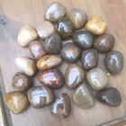 NATURAL POLISHED FOSSIL WOOD TUMBLESTONES - Crystals/Gemstones/Petrified Wood