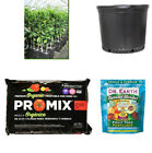 Grafted Lime Citrus Tree + 7 Gallon Pot + Organic Soil + Organic Fertilizer