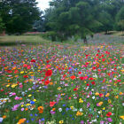 100% Wild Flower Seed Mix Annual Meadow Plants Attracts Bees &amp; Butterfly <br/> 50g to 1kg | Sample Available | Fast &amp; Free Delivery