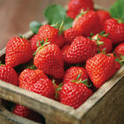 200 PCs Strawberry Seeds Nutritious Delicious Healthy Fruit Vegetables Seed Hot