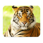 Animal Pattern Tiger Wolf Soft Rubber Mouse Pad Mat Laptop Computer PC MousePad
