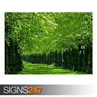UNDER THE TREES (AE060) NATURE POSTER - Photo Picture Poster Print Art A0 to A4