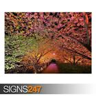 TUNNEL OF LOVE (AE065) NATURE POSTER - Photo Picture Poster Print Art A0 to A4