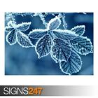 FROZEN LEAVES (AE068) NATURE POSTER - Photo Picture Poster Print Art A0 to A4