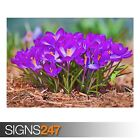 A WORMS EYE VIEW OF SPRING (AE081) NATURE POSTER - Poster Print Art A0 A1 A2 A3