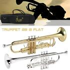 Trumpet Bb B Flat Brass Exquisite with Mouthpiece Gloves for Beginner USA Stock