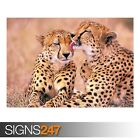 SOUTH AFRICAN CHEETAHS (3395) Animal Poster - Poster Print Art A0 A1 A2 A3 A4