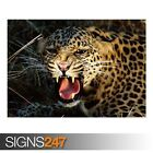 SNARLING CHEETAH (3531) Animal Poster - Picture Poster Print Art A0 A1 A2 A3 A4