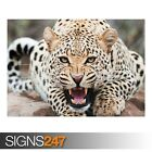 AMAZING CHEETAH (3488) Animal Poster - Picture Poster Print Art A0 A1 A2 A3 A4