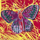 "26W""x26H"" SAN FRANCISCO SILVERSPOT BUTTERFLY by ANDY WARHOL - CHOICES of CANVAS"