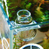 Crystal Glass Pot Plant Cup Holder Red Shrimp quarium Tank Fish ASt M2O2