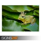 KISS THE FROG PRINCE (AE852) - Photo Picture Poster Print Art A0 A1 A2 A3 A4