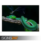 GREEN WHITE-LIPPED PIT VIPER (AE916) - Photo Picture Poster Print Art A0 to A4