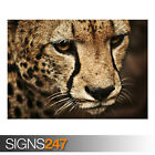 CHEETAH (AE917) - Photo Picture Poster Print Art A0 A1 A2 A3 A4