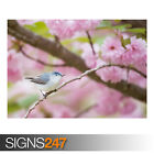 BLUE-GRAY GNATCATCHER BIRD (AE918) - Photo Picture Poster Print Art A0 to A4