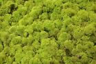 Reindeer Moss - Dark Green, Forest Green, Spring Green, Natural Preserved Moss <br/> Add ANY 4 to basket for Buy 3 get 1 Free mix n match!!