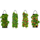 Hanging Vegetable Garden Seeds Kit - Jalapeno, Cheery, Roma Tomato, Sweet Pepper