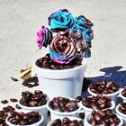 Tropical Abstract Pink and Blue Roses and the famous Colada Mini Cups Fine Art