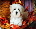 White Puppy Dog Art Poster Print New