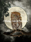 Eastern Screech Owl against Full Moon Bird Matted Picture Home Wall Art A272