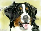 Bernese Mountain Dog Art Print Watercolor Painting Judith Stein Signed DIAMOND