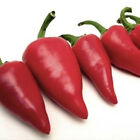 """Fresno Red "" Hot Chile Pepper Seeds"