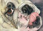 English Bulldog Dog Art Print of Watercolor Artist Signed JUST LICKIN' AROUND